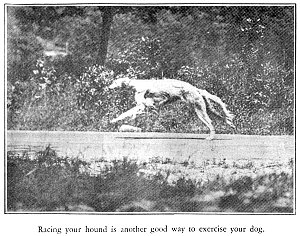 Racing for Exercise
